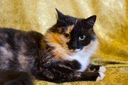 Charakter Katze sucht Bedienung
