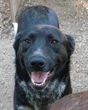 Amando - Traumhund sucht ein Zuhause