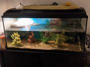 Wasserschildkröten mit Aquarium L100 B40