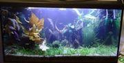 112-120L Aquarium komplett mit Besatz