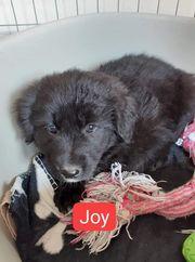 Joy sucht ein Zuhause