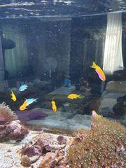 Div Korallen und Fische zusammen