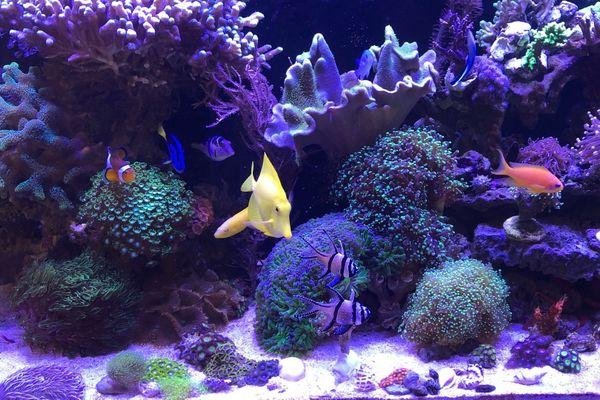 Korallen SPS LPS Zoas Zoanthus