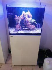Meerwasseraquarium Red Sea Aquarium 170