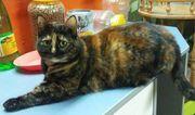 Katzenlady Lola möchte Dein Herz