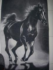 Blickfang für Pferdefreunde