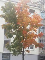 Tagesworkshop Vom Wesen der Bäume