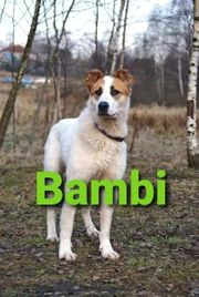 Hündin Bambi sucht ihr Traumzuhause