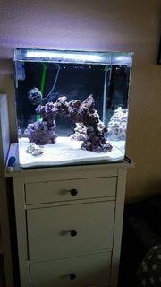 Meerwasser Aquarium 90L