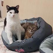 Elsie und Bobby zwei Geschwister