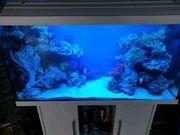 Meerwasser Aquarium Komplett in weiß