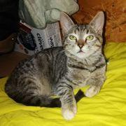 Entzückendes Kätzchen Elisa sucht ihre