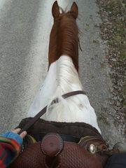 Suche Reitbeteiligung Pferd - nur Western