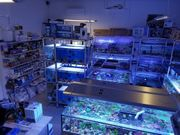 Meerwasser Salzwasser Korallen Ableger Muscheln