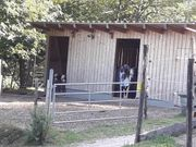 Stallplatz Stute Offenstall
