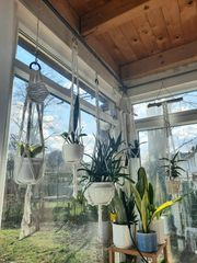 Blumenampel Pflanzenampel Pflanzenhänge