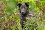 Hundeomi in schwarz sucht eine