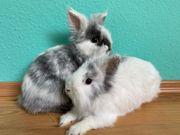 2 Kaninchengeschwister zu verkaufen