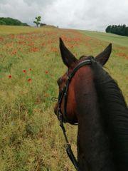 Pferdeboxen Selbstversorger frei