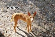 Penny sehnt sich sehnlichst nach