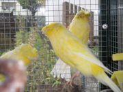 Löse meinen Vogelbestand auf