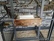 Vögel Badewanne