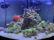 Meerwasser Aquarium 200 Liter