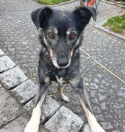 Crisby wartet in München