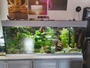 Aquarium mit Technik und Tieren