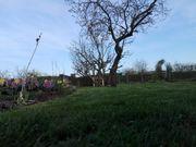 Wunderschöner Garten Kleingarten Schrebergarten