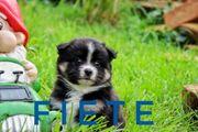 kleine süße Therapie Hunde durfen