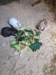 Kaninchen suchen artgerechtes zu Hause