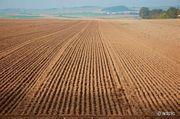Ich suche Ackerland oder Wiesen