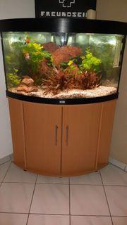 Aquarium 190l komplett abzugeben wegen