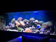 960 Liter Meerwasseraquarium