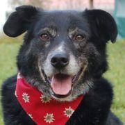 Sebastian - 10 Jahre - Mischling - Tierhilfe