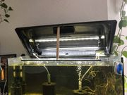 Aquarium 80x35x35cm inkl Beleuchtung