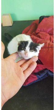 Cathy Katze aus dem Tierschutz