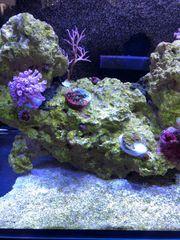verschiedene Korallen wegen Hobby Aufgabe