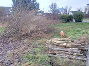 Holz kostenlos zum selber schlagen -
