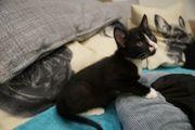 Kitten Ferguson- nicht in Einzelhaltung
