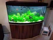 Aquarium fluval 260 Liter mit