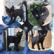 Katze Tilda 14 Wochen geimpft