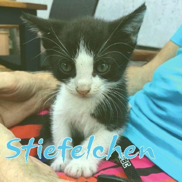 Neues Katzen-Zuhause gesucht verschmust menschenbezogen