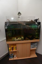 Aquarium Terrarium mit Wasserschildkröten