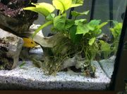 Aquarium Totenkopf mit Anubien
