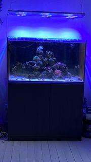 325L Aquarium
