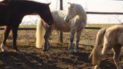 Weihnachts Geschenk für Pferde Liebhaber