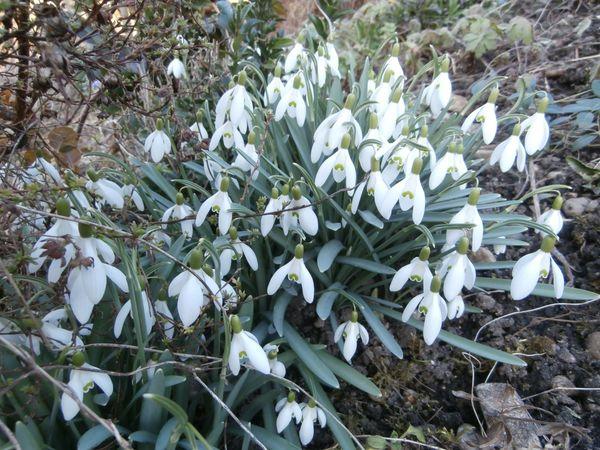 Günstig von Privat winterharte Blumen