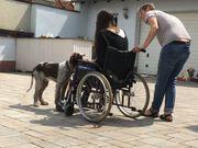 Fachkraft für Tiergestützte Therapie Ausbildung